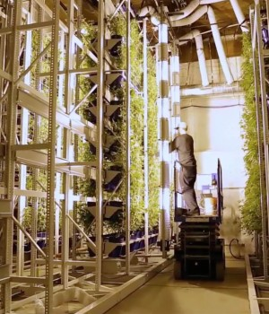 Mobile racking holding potted cannabis vertically for most efficient use of space at Colorado Cannabis Operation
