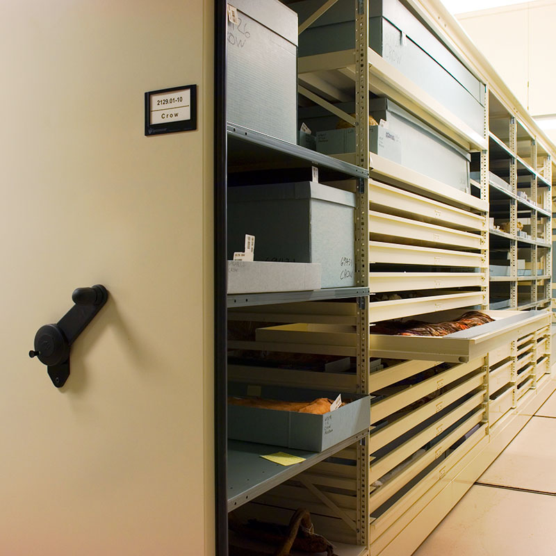 configurable museum shelving