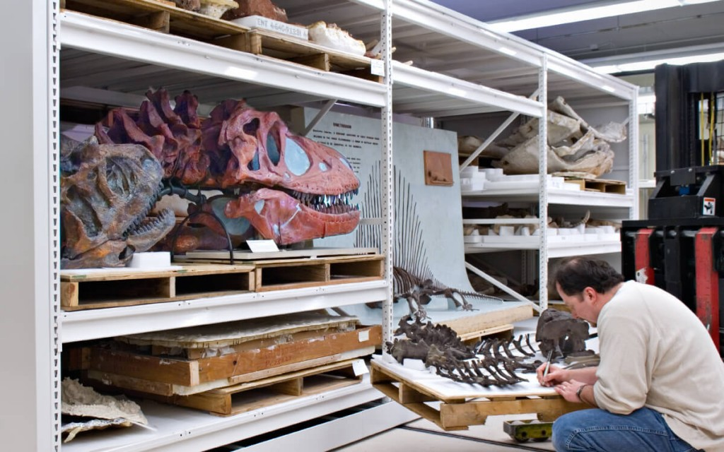 Oversized fossils stored on custom 4-post shelving, Chicago Field Museum