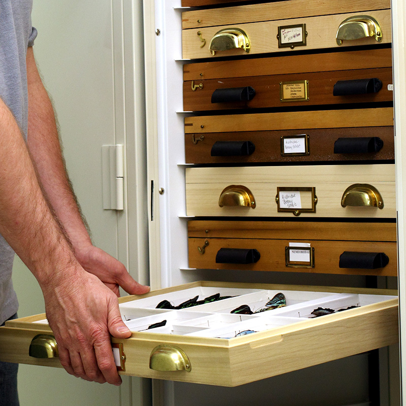 combining-entomology-drawers-different-collections-museum