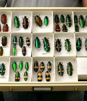 entomology-drawer-museum-cabinet-storage
