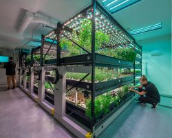 Learn how an innovative Spacesaver system helped a Manhattan indoor farm grow more herbs in a small space.