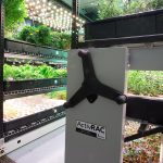 Farm.One: Growing Hydroponic Herbs in Manhattan