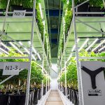 mobile vertical grow racks galenas facility