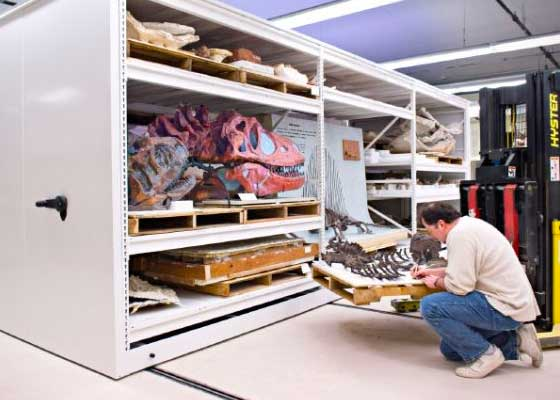 oversize heavy-duty collection conservation storage