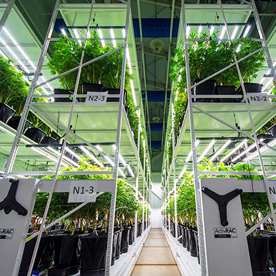 cannabis indoor vertical grow systems