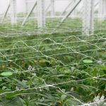 indoor vertical racking cannabis system