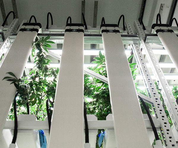 indoor medical cannabis racking systems