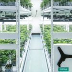 vertical indoor cannabis grow room