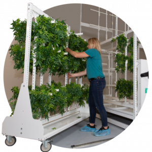 grow drying system